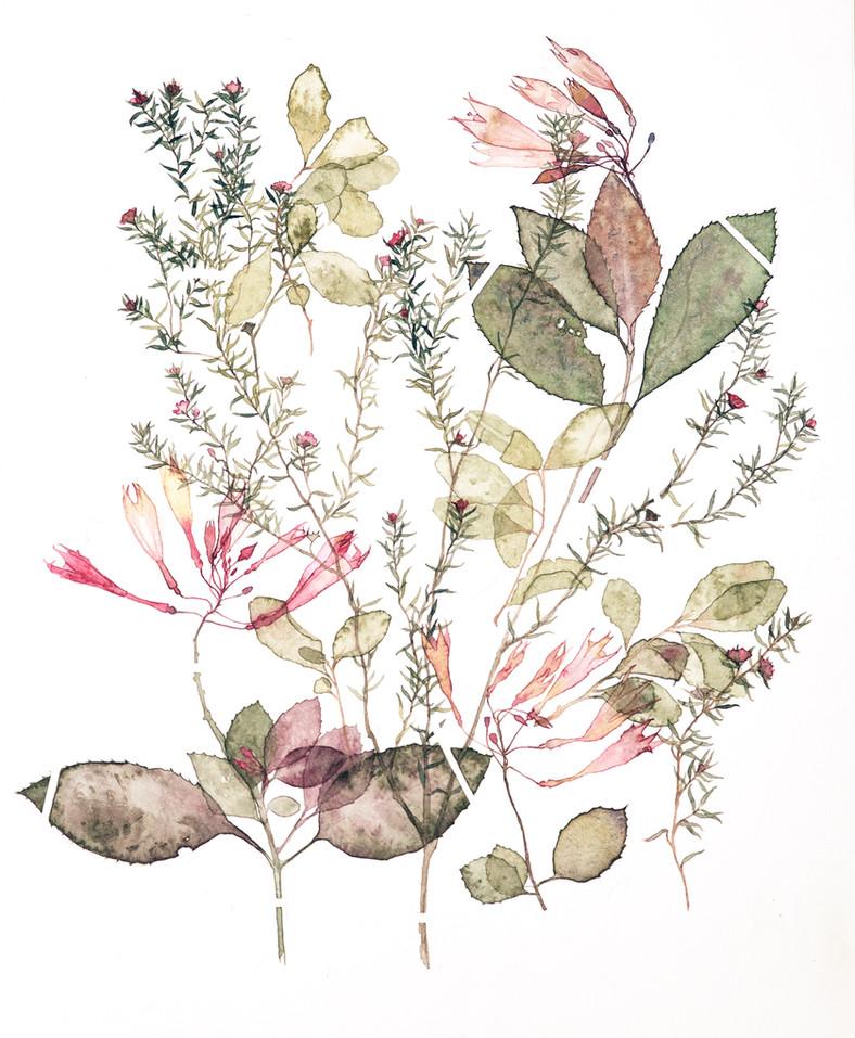 Environ #1 (2017) Watercolour on paper, 400 x 500mm.