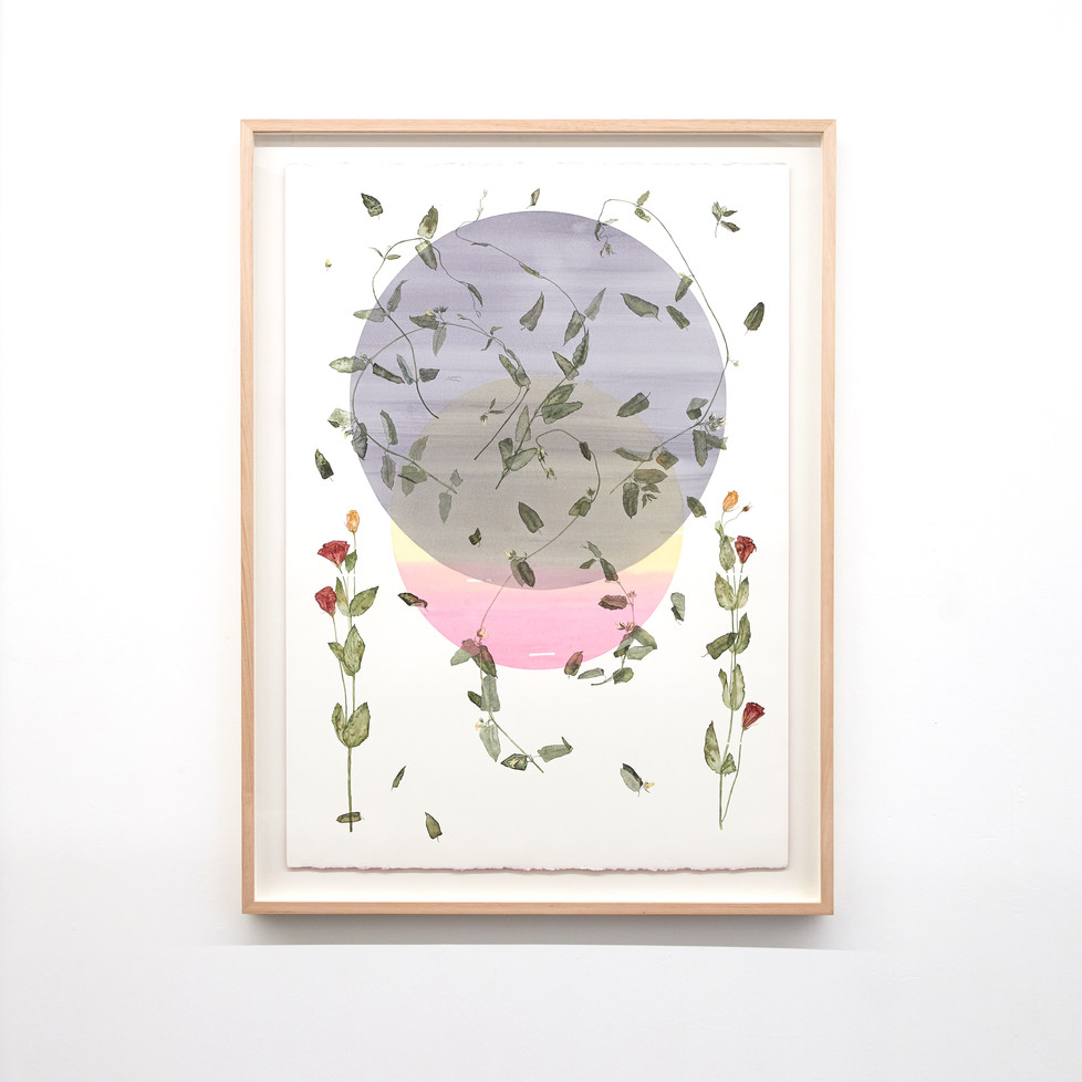 Solar Eclipse and Bushfire Smoke (Mothplant and Lisianthus) 2020 Watercolour on 640gsm cotton rag, sprayed en verso, 1190mm H x 888mm W x 40mm D (framed dimensions).