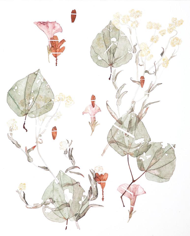 Environ #3 (2017) Watercolour on paper, 400 x 500mm.