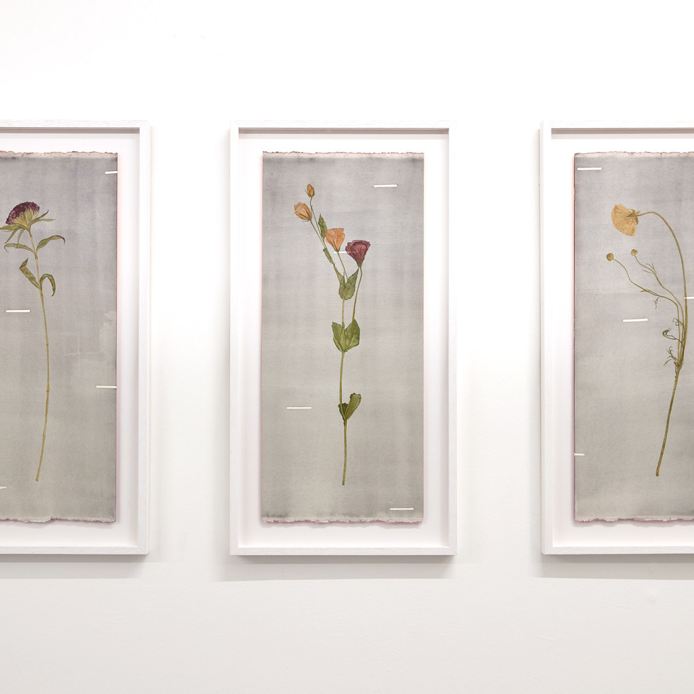 From A Strangers Wedding lll (Verbena), l (Lisianthus) and ll (Cosmos) 2020 Watercolour on 640gsm cotton rag, sprayed en verso, 672mm H x 350mm W x 28mm D (framed dimensions).
