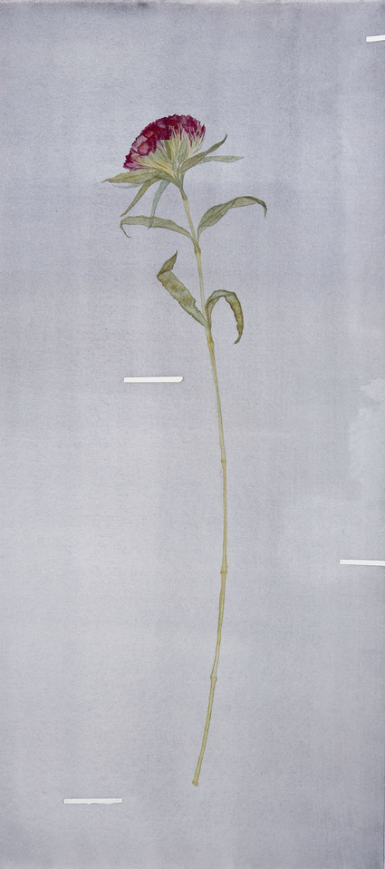 From a Strangers Wedding III (Dianthus) 2020. Watercolour on 640gsm cotton rag and spray painted en verso, 580 x 220mm.