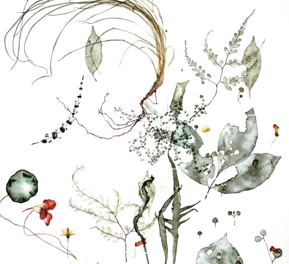 Specimens of Huia Regional Park (2017) Watercolour on paper, 780 x 1050mm.