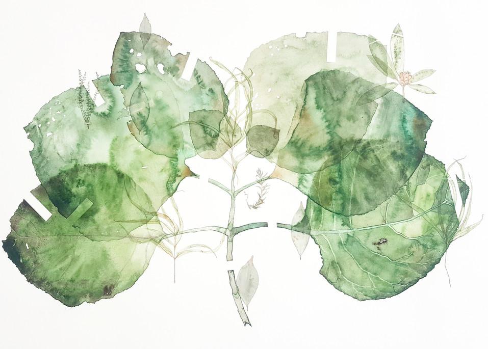 Environ #5 (2017) Watercolour on paper, 1200 x 850mm.