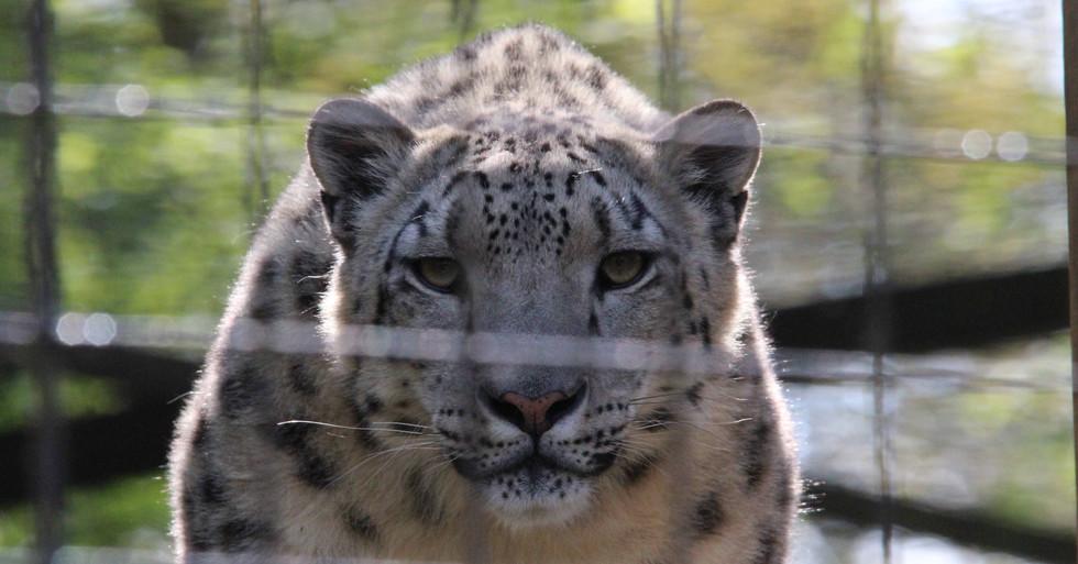 cheeta web 1.jpg