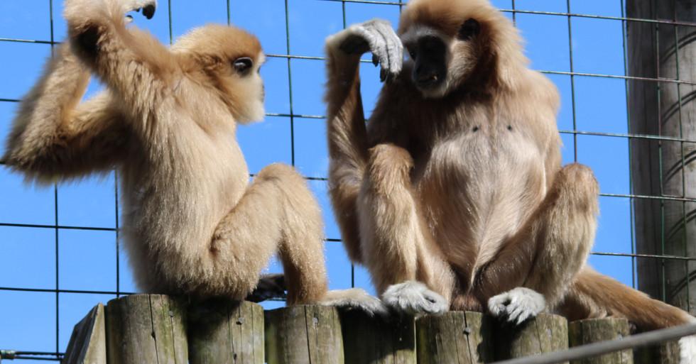 monkeys web 1.jpg
