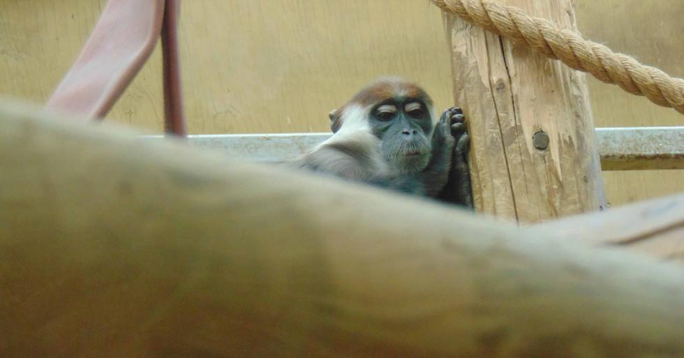 monkey web.jpg
