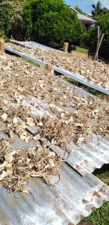 Sun Dry Root