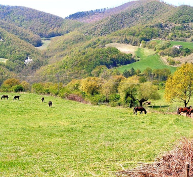 Agricultural holding of 150 hectares with livestock and two farmhouses