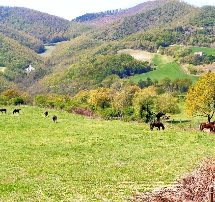 Azienda agraria di 150 ettari con allevamento e due agriturismi