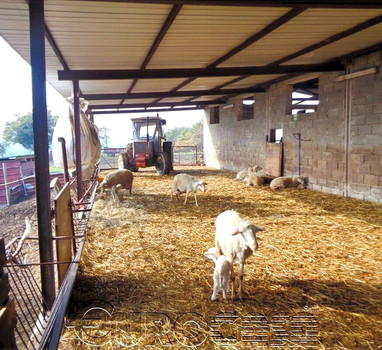 Agricutural holding of 100 hectare with sheep and dairy farm