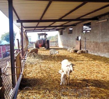Azienda di 100 ettari con allevamento ovino e caseificio