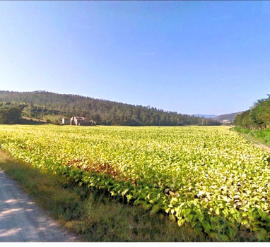 Agricutural holding of 47 hectares and two farmhouses