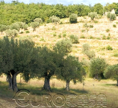 Agricutural holding of 72 hectares with ruin
