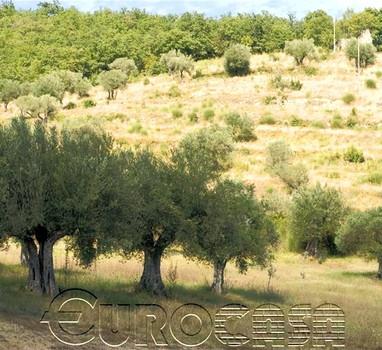 Azienda agraria con 72 ettari con rudere