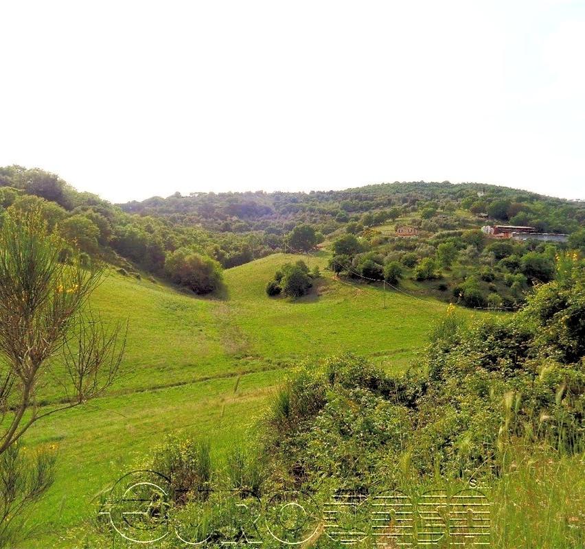 Azienda agraria di 50 ettari con casale, capannone e caseificio