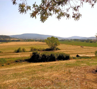 Agricutural holding of 166 hectare with vineyard and irrigated arable land