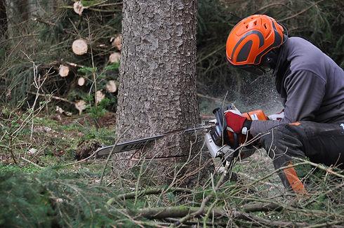 forestry-4272923_1920.jpg
