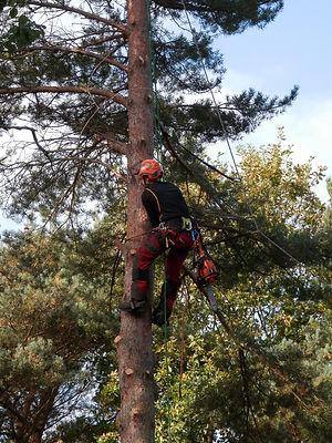 tree-surgeon-1766175_1920.jpg