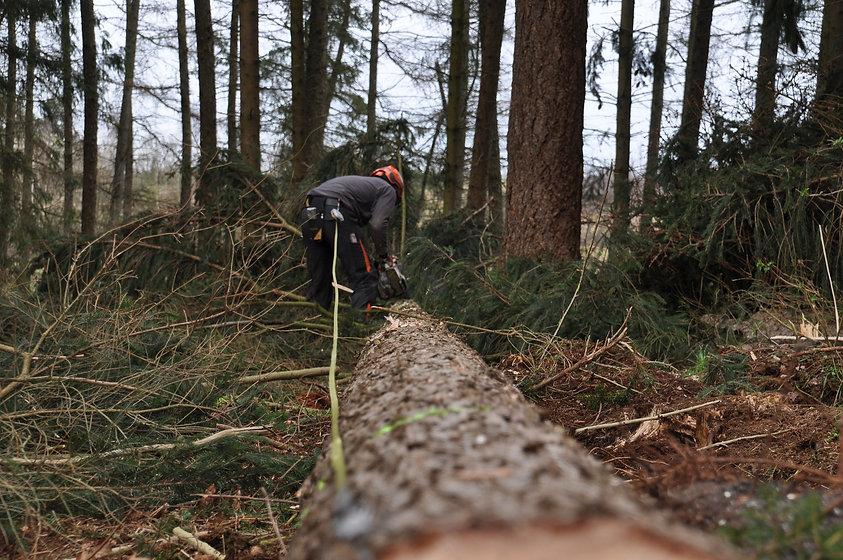 forestry-4272926_1920.jpg