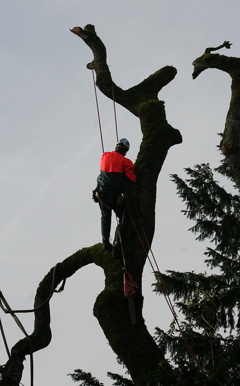 tree-climbers-4820104_1920_edited.jpg