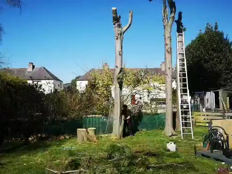 Tree Surgery Services in Glasgow