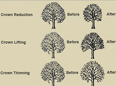 A quick guide to tree services we offer