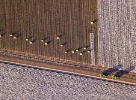 Colheita do algodão: conheça melhores práticas para uma operação de sucesso