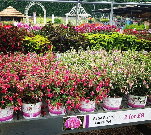 #flowerland #gardencentre
