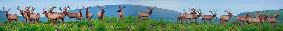 Double Elk Herd.jpg