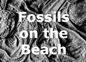 Fossils on the Beach (Part II)
