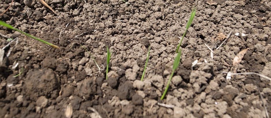 自然農の田んぼ塾 苗床草抜き