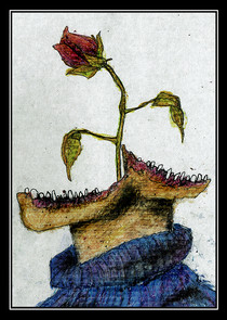 /211 - 231 PLANT