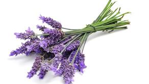 """Flores que Curan: """"Lavanda"""""""