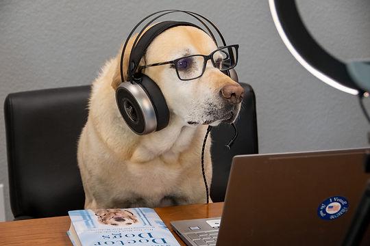 Hollis Dog Talk Live Host.jpg