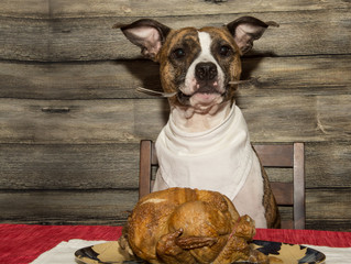 Don't feed your dog the fat off the Christmas ham!