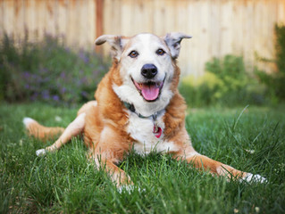 Management of Arthritis in your Pet.
