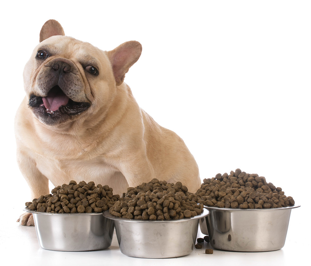 How much should I feed my overweight pet