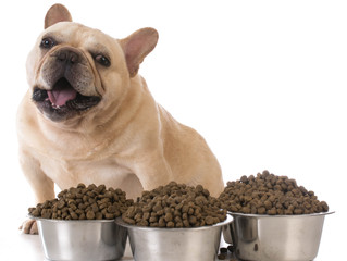 How much should I feed my overweight pet?