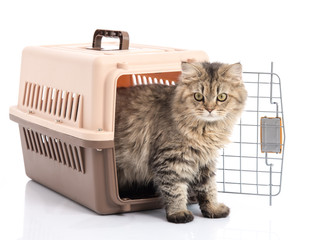 How do I get my cat to like the cat carrier?