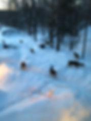 pêche_sur_la_glace,photo_7.jpg