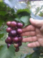 grapes_edited_edited.jpg