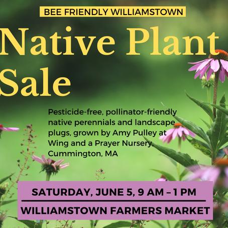 Bee Friendly Williamstown!