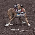 PCC Dog Park 2019-11-16 075.jpg