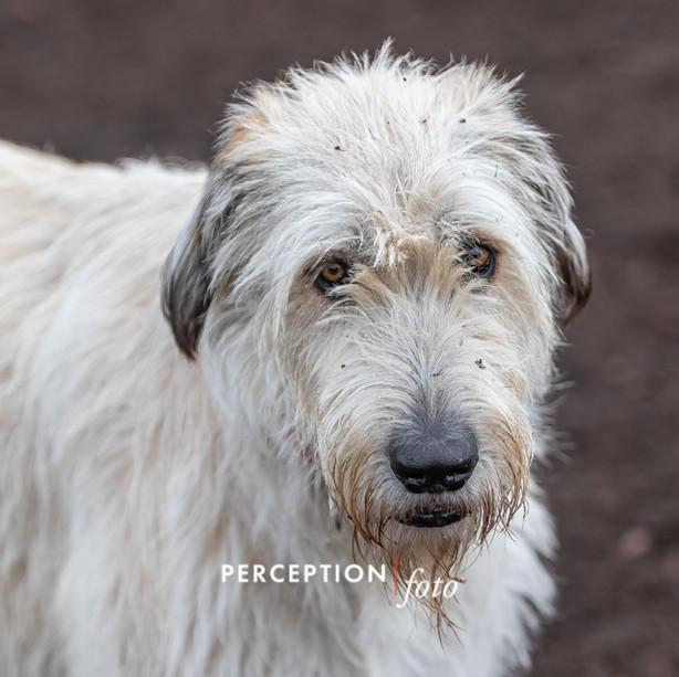 PCC Dog Park 2019-11-16 121.jpg