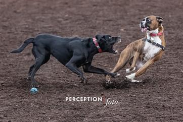 PCC Dog Park 2019-11-16 072.jpg