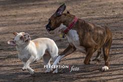 Dog Park 03-08-20 2020-03-08 227.jpg