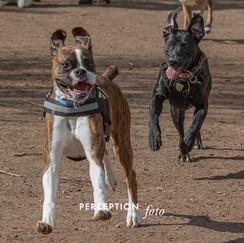 Dog Park 03-08-20 2020-03-08 404.jpg