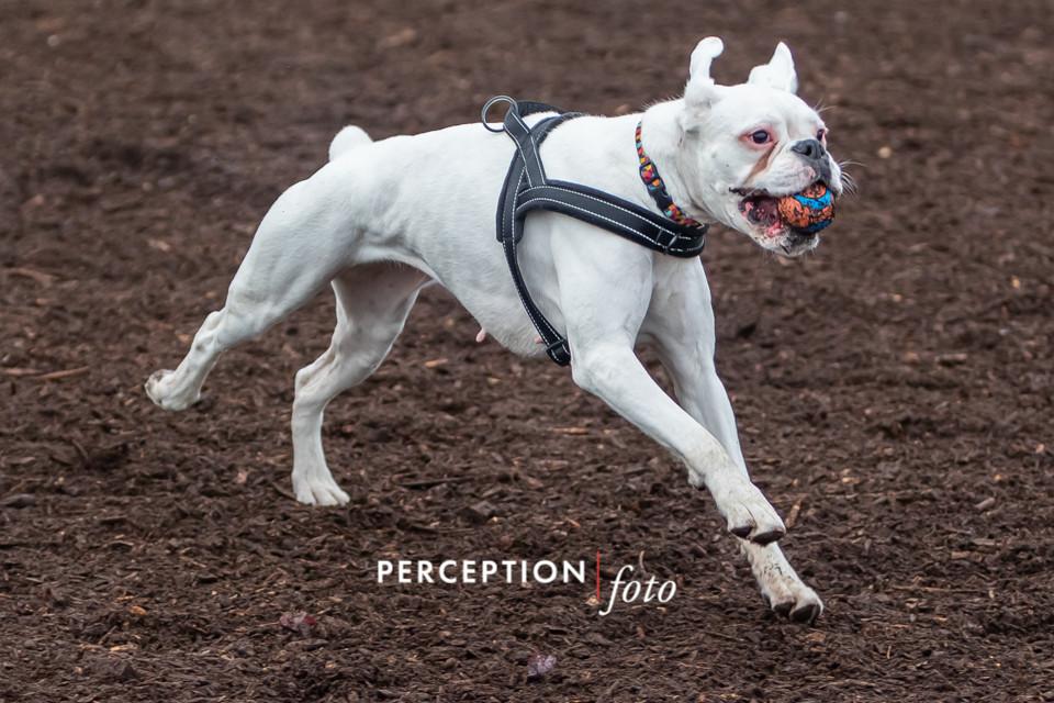 PCC Dog Park 2019-11-16 032.jpg