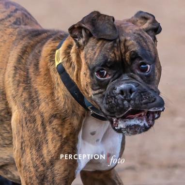 Dog Park 03-08-20 2020-03-08 143.jpg