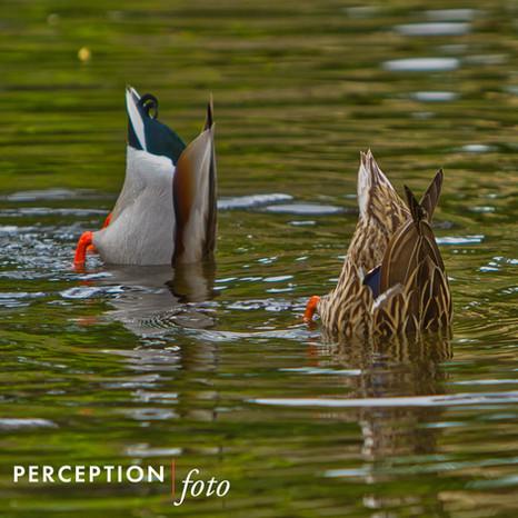 duck dive 1.jpg